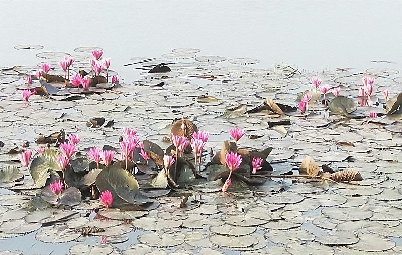 タイの田舎の野池