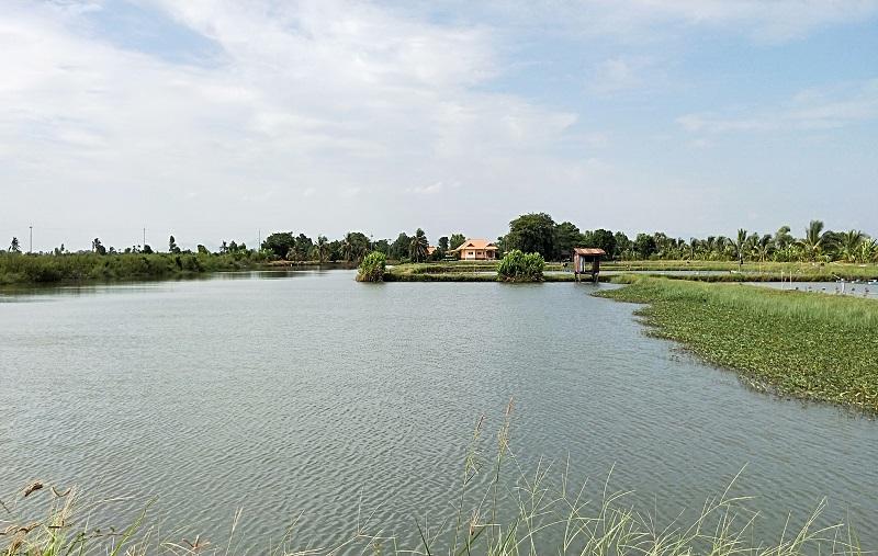 タイの田舎