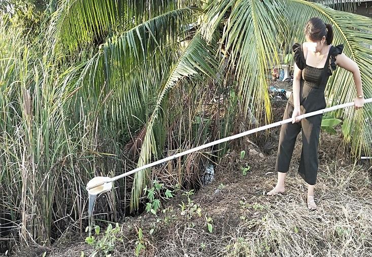 バナナの苗に水をあげる