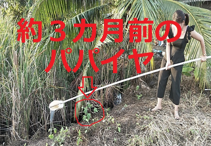 タイ田舎生活