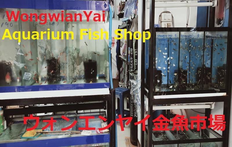 ウォンエンヤイ金魚市場