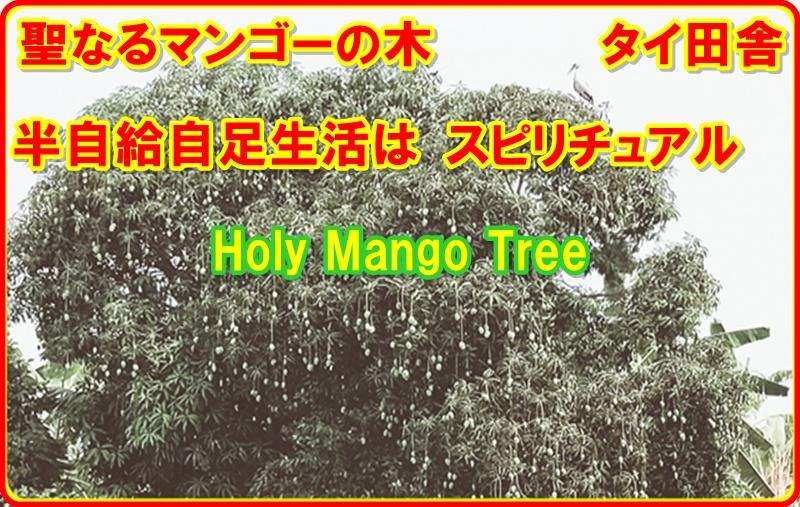 マンゴーの木