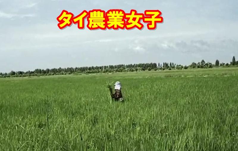 タイ農業女子